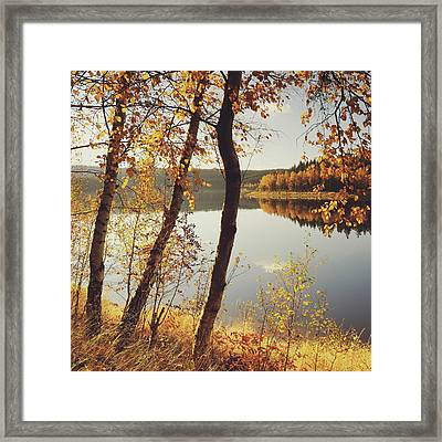 Birch Trees And Reflected Autumn Colors Framed Print by Stefan Mendelsohn
