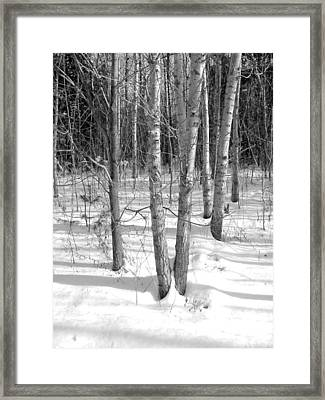 Birch Trees Framed Print by Douglas Pike