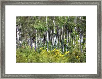Birch Trees Framed Print by Gary Grayson