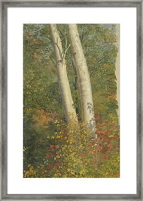 Birch Trees In Autumn Framed Print by Frederic Edwin Church