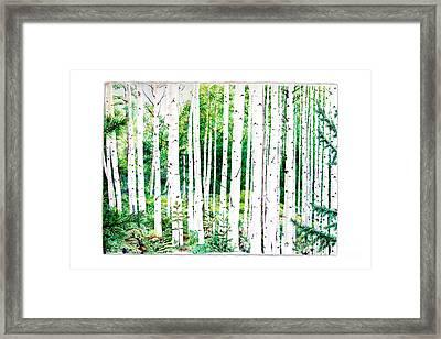 Birch Trees Framed Print by Jennifer Apffel