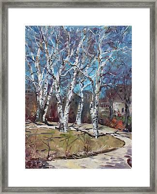 Birch Trees Next Door Framed Print by Ylli Haruni