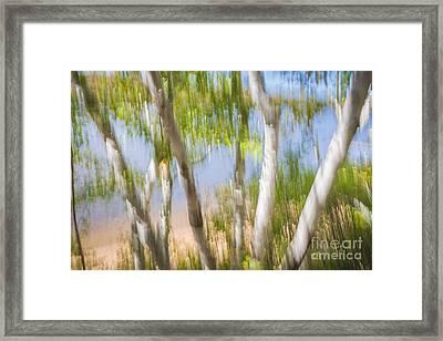 Birch Trees On Lake Shore Framed Print by Elena Elisseeva