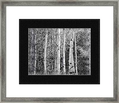 Framed Print featuring the photograph Birch Trees by Susan Kinney