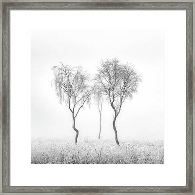 Birch Trio Framed Print by Janet Burdon