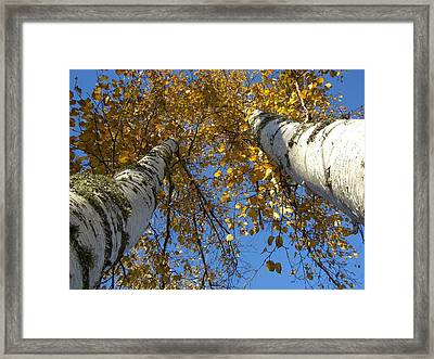Birch Twins Framed Print by Jessica Yudis