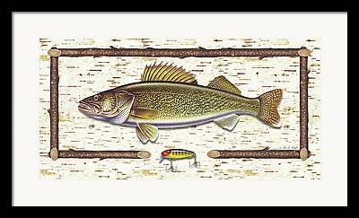 Walleye Paintings Framed Prints