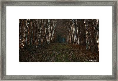 Birches At Blue Hour Framed Print by Harry Moulton