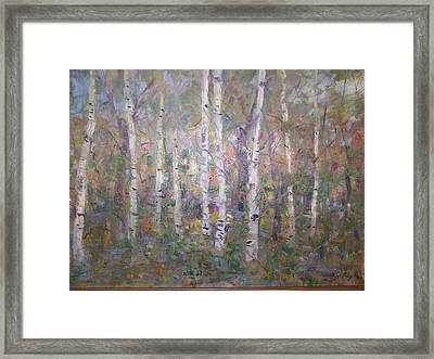 Birches. Framed Print