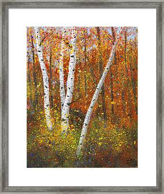 Birches Framed Print by Garry McMichael