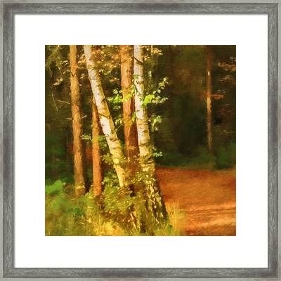 Birches In Fall Framed Print by Lutz Baar