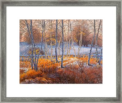 Birches In First Snow 2 Framed Print