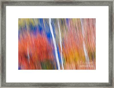 Birches In Red Forest Framed Print