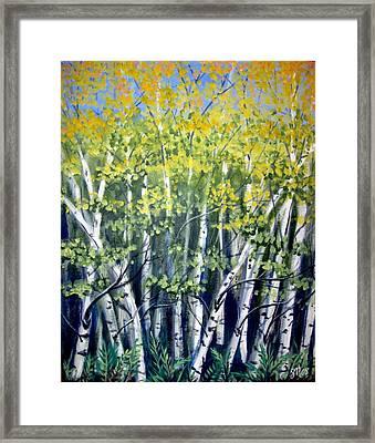 Birches Framed Print by Sharon Marcella Marston