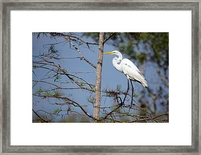 Bird 154 Framed Print