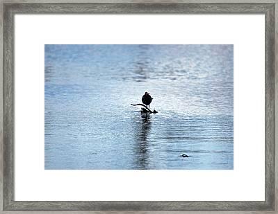 Framed Print featuring the photograph Bird 7986 by Teresa Blanton
