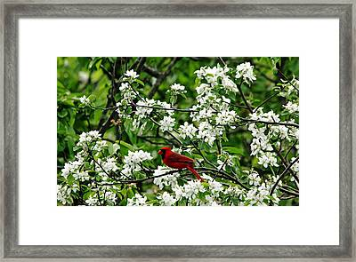 Bird And Blossoms Framed Print