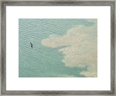 Bird And Churning Sand Framed Print