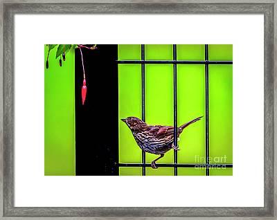 Bird And Red Fuchsia Flower Framed Print
