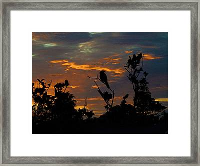 Bird At Sunset Framed Print