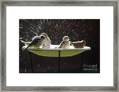 Bird Bathing Spree Framed Print by Gordon Wood