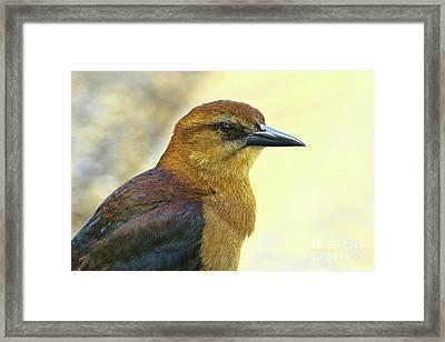 Framed Print featuring the photograph Bird Beauty by Deborah Benoit