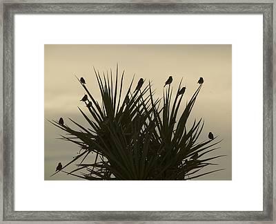 Bird Bush Framed Print by Clyde Replogle