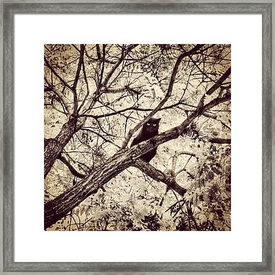 Bird-cat II Framed Print