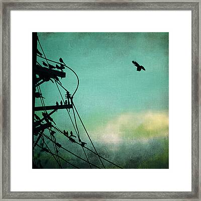 Framed Print featuring the photograph Bird City Revisited by Trish Mistric