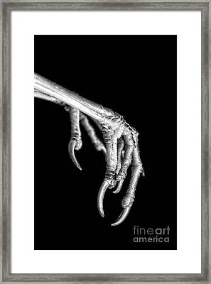 Bird Claw Black And White Framed Print by Edward Fielding