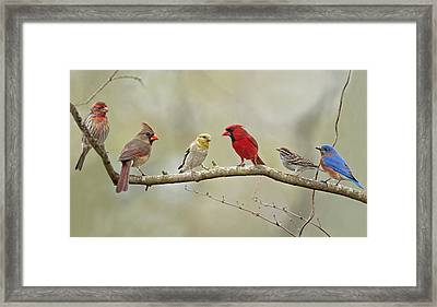 Bird Congregation Framed Print