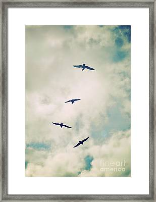 Framed Print featuring the photograph Bird Dance by Lyn Randle