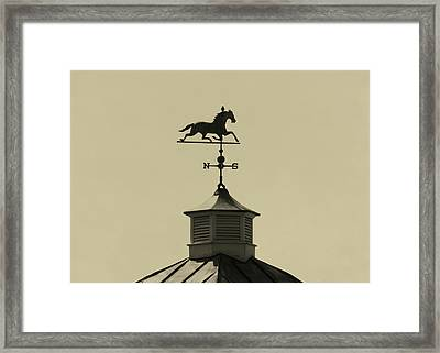 Bird Direction Framed Print by JAMART Photography