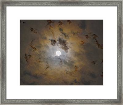 Bird Dreams Framed Print by Sue McGlothlin