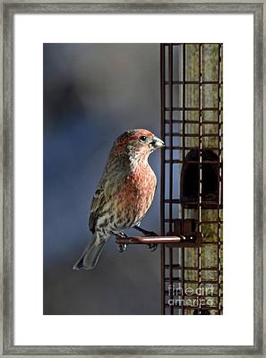 Bird Feeding In The Afternoon Sun Framed Print