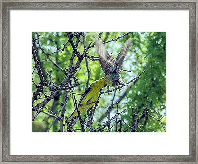Bird Feeding Framed Print by Tam Ryan