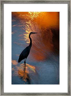 Bird Fishing At Sundown Framed Print by Williams-Cairns Photography LLC