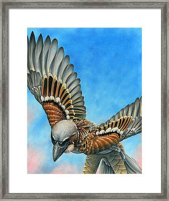 Bird Flight Framed Print