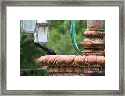 Bird Fountain  Framed Print