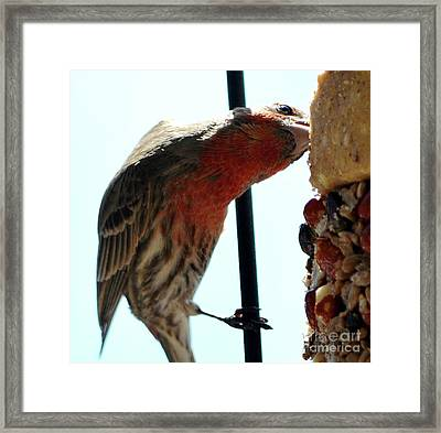 Bird Hits The Jackpot Framed Print