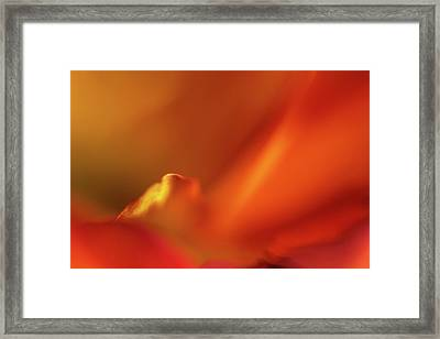 Bird In A Mum Framed Print