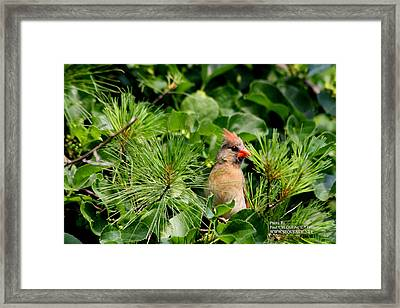 Bird In A Tree 2 Framed Print