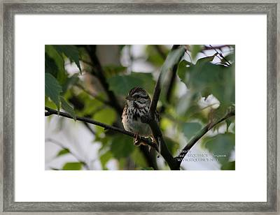 Bird In A Tree Framed Print