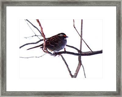Framed Print featuring the photograph Bird In A Winter Bush. by Roger Bester