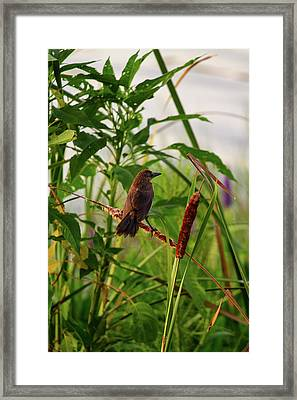 Bird In Cattails Framed Print