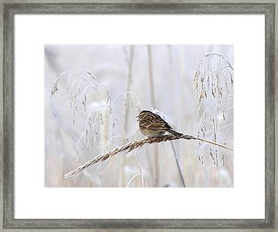 Bird In First Frost Framed Print
