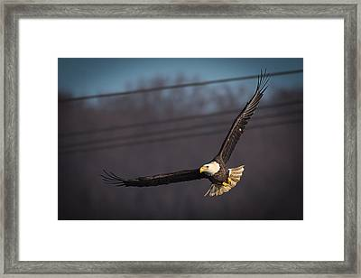 Bird In Flight  Framed Print