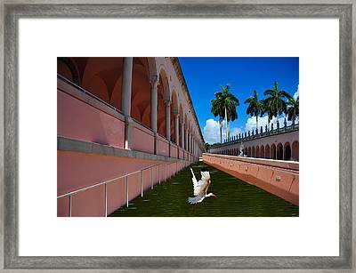 Framed Print featuring the photograph Bird In Flight by Harry Spitz