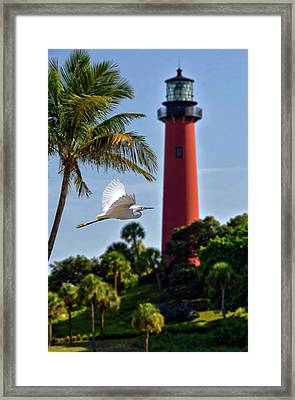 Bird In Flight Under Jupiter Lighthouse, Florida Framed Print
