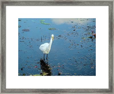 Bird In Lake Framed Print